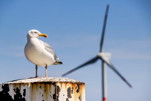 Der Wind an der Nordsee kann genutzt werden