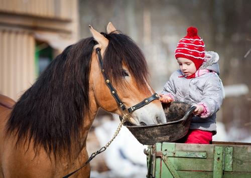 Auf dem Reiterhof gibt es für jeden etwas zu tun