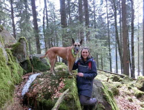 Erfahrungsbericht zum Fastenwandern im Schwarzwald