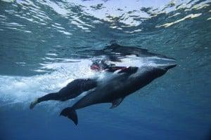 Dubai Atlantis Dolphin Bay